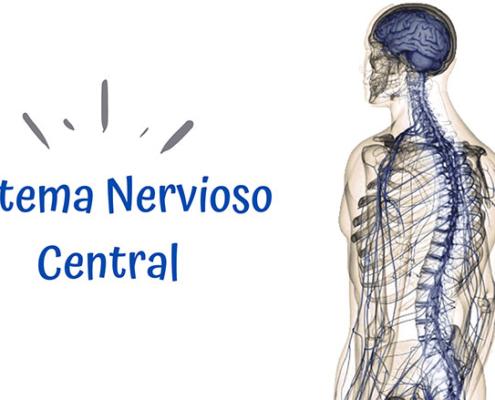 Imagen columna vertebral quiropráctico Badalona
